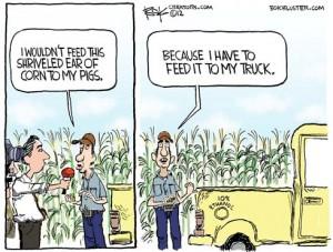 120814corn-drought-ethanol